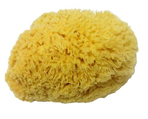 herbe soie naturelle éponges de mer pour la baignade / nettoyage / arts 10 cm environ