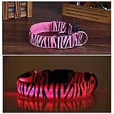 Cdycam Sicherheit Verstellbare LED blinkendes Licht bis Hundehalsband aus Nylon mit Wasser beständig, ideal für kleine medium Große Hunde