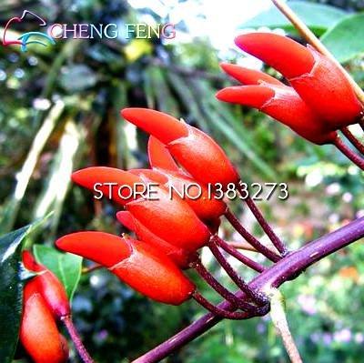 Shopmeeko 2016 Hot 50pcs / lot Erythrina Crista Galli Brésiliens arbustes Plantes Belle Fleur Bonsaï Plante Arbre DIY Maison Jardin Free Shippin: Jaune Clair