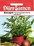 Dürr-Samen Estragon Artemisia (dracunculus)