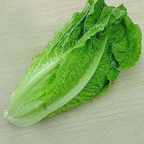 Lettuce- Romaine- Parris Island-100 Seeds (Romaine Seeds Lettuce)