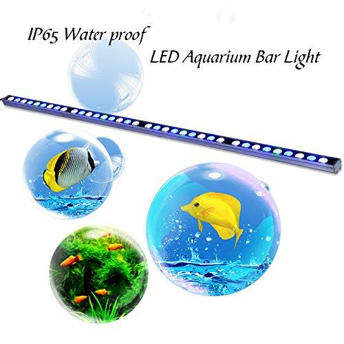 Inspirationen Aquarium Led Beleuchtung Süßwasser 2018: Led Meerwasseraquarium Beleuchtung Vergleich Und