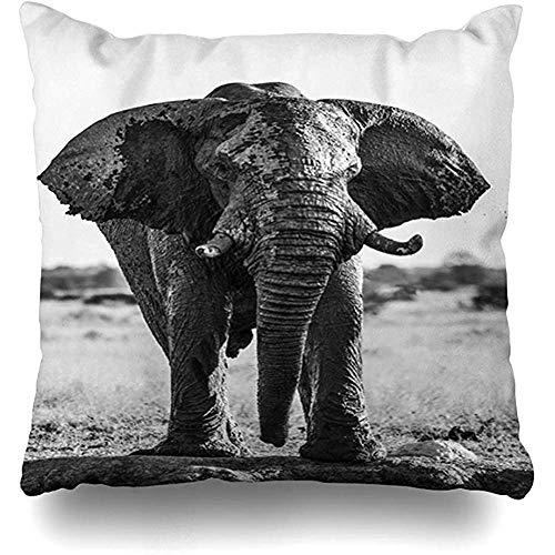 Funda de cojín Elefante africano salvaje Pozo de agua África Botswana Bebedero Herbivore Nature Design Funda de almohada para el hogar Tamaño cuadrado es Funda de almohada con cremallera 45X45CM