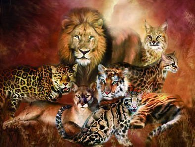 Animal Pictures Amazon Co Uk