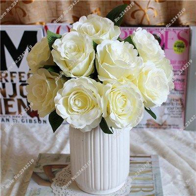 Exotique Miniature Bonsai Fleur Rose Rosas Graine Bricolage jardin et maison embellissant de purification d'air 110 Pcs/Sac 2