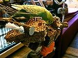 Kork Knabberbar – Tolles Vogelspielzeug gegen Langeweile im Vogelkäfig - 6