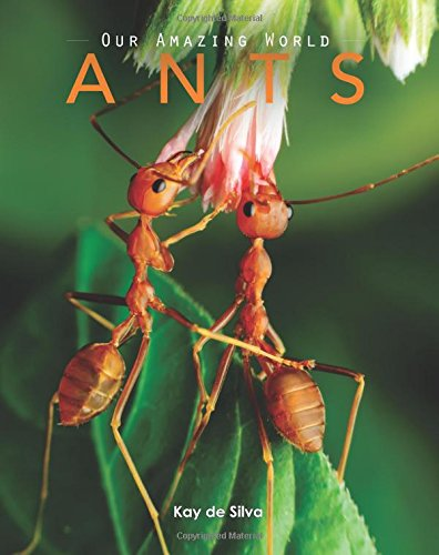 ants-amazing-pictures-fun-facts-on-animals-in-nature-our-amazing-world