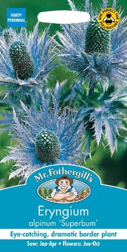 Unbeheizte Schale (Mr Fothergills Pilzsporen, Blume Eryngium alpinum Superbum, 50 Samen)