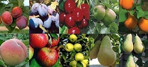 fruit-tree-mixed-selection-pack-10x-6-7ft-trees-supplied-bare-rooted
