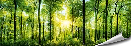 ARTBAY Wald Poster XXL, Panorama Kunstdruck - 118,8 x 42 cm, von Sonne durchfluteter, Zauberhafter, heimischer Wald | Wandposter, Fotoposter, Wandgestaltung | Natur Poster |Premium Qualität