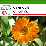 SAFLAX - Botón de oro - 50 semillas - Con sustrato - Calendula officinalis