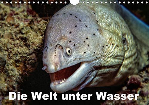 Die Welt unter Wasser (Wandkalender 2021 DIN A4 quer): Unterwasseraufnahmen von Meerestieren im Mittelmeer, Roten Meer und Indischen Ozean. (Monatskalender, 14 Seiten ) (CALVENDO Tiere)