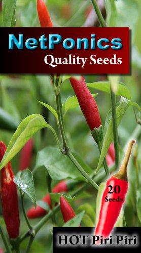 chilli-seeds-piri-piri-peri-peri-african-birdseye-or-african-devil-or-african-red-devil-pack-of-20-r