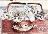 Edition Seidel Katzen Kinder Premium Kalender 2020 DIN A3 Wandkalender