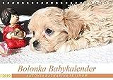 Bolonka Babykalender 2019 (Tischkalender 2019 DIN A5 quer): Ein gelungener Kalender mit hinreißenden Welpenfotos, denen sich kein Herz verschließen kann. (Monatskalender, 14 Seiten ) (CALVENDO Tiere)