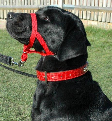 Halti Hundehalfter in Größe 3 (rot) - 5