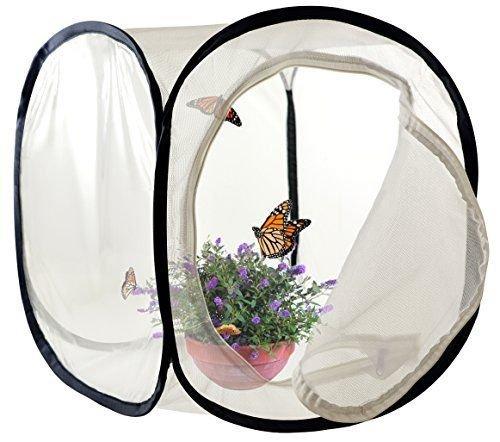 insectes et papillon Cage Terrarium pop-up (30,5 x 30,5 x 30,5 cm) Green