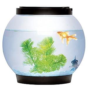Sentik® 5 Litre Glass Fish Bowl LED Light Aquarium Goldfish Betta Tank Accessories (Black)