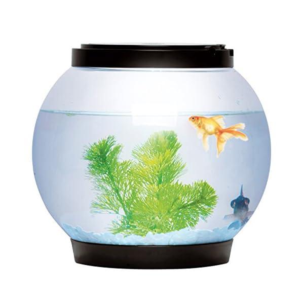 Sentik® 5 Litre Glass Fish Bowl LED Light Aquarium Goldfish Betta Tank Accessories (Pink)
