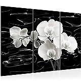 Bilder Blumen Orchidee Wandbild 120 x 80 cm Vlies - Leinwand Bild XXL Format Wandbilder Wohnzimmer Wohnung Deko Kunstdrucke Schwarz Weiß 3 Teilig - MADE IN GERMANY - Fertig zum Aufhängen 203231a