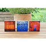 3er Set Foto auf Holz, im Quadrat, 8,5 x8,5