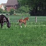 Kiepenkerl Country Horse 2117 Pâturage pour chevaux 10 kg Semences ...