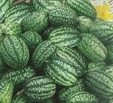 Mexikanische saure Gurke, Cucamelon, Maus Melone - samen