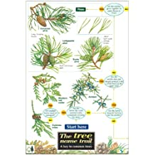 Tree Name Trail: A Key to Common Trees (Field Studies Council Occasional Publications)