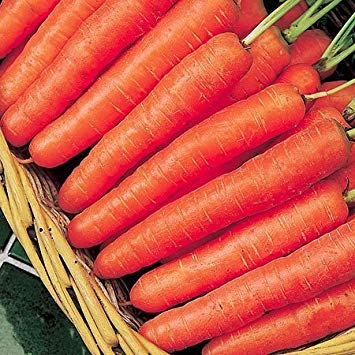 Shop Meeko Carrot - Early Nantes 2-1000 Samen