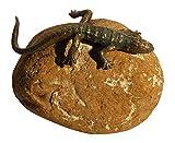 Patric Rottenecker Bronzefigur, Eidechse gebogen aus Bronze montiert auf Kiesel, bronzefarben, 15 x 17 x 16 cm, 991243