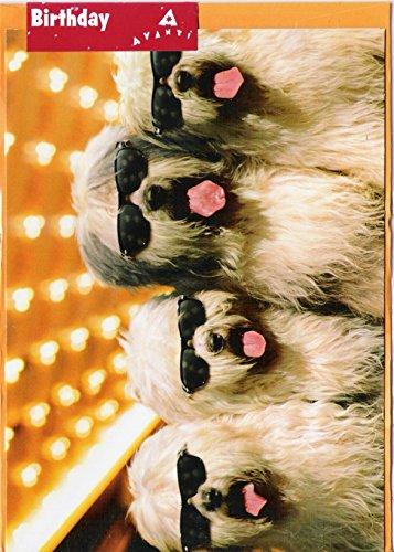 Vier Hunde in Sonnenbrille