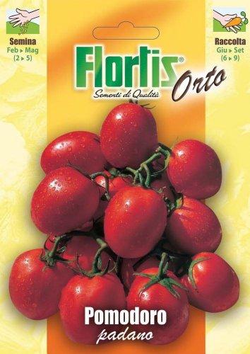 Flortis 4355278 Tomate Padano (Tomatensamen)