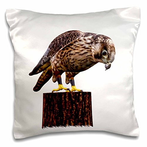 boehm-graphics-bird-a-falcon-on-a-tree-limb-looking-down-at-prey-16x16-inch-pillow-case-pc-180523-1