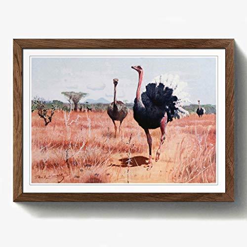 BIG Box Art Vintage W H. Kuhnert afrikanischen Strauß Schwarz Gerahmter Druck, Mehrfarbig, 24,5x 18/62x 45cm/a2-p, Holz, walnuss, 24.5 x 18-Inch/62 x 45 cm/A2 - Afrikanische Walnuss