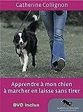 Image de Apprendre à mon chien à marcher en laisse sans tirer