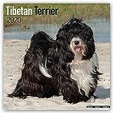 Tibetan Terrier - Tibet Terrier 2020: Original Avonside-Kalender [Mehrsprachig] [Kalender] (Wall-Kalender)