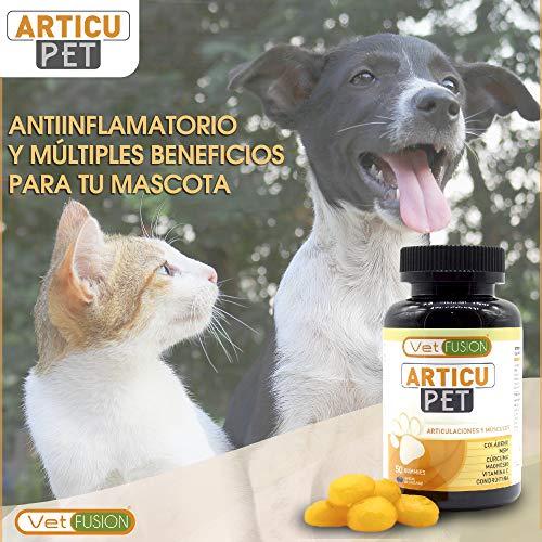 510BwldPWxL - Antiinflamatorio Natural para Perros y Gatos | Colágeno + Cúrcuma + Condroitina + Magnesio + MSM + Vitamina C | Combate el dolor y la inflamación | Recupera su energía y movilidad | 50und. sin azúcar