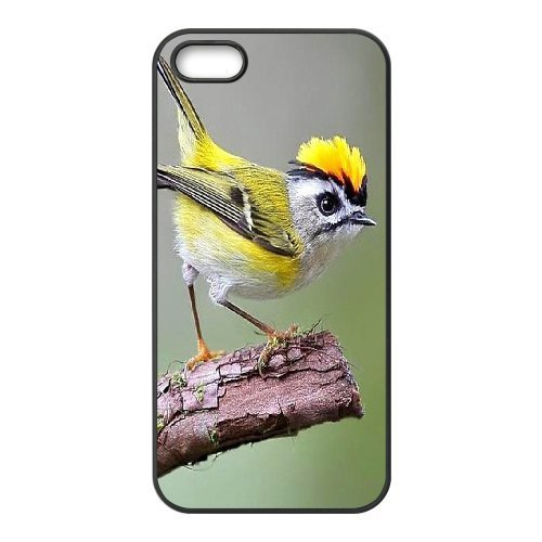 Diy Case for iPhone 5,5S ,Hummingbird Customized case Fashion Style UN221620