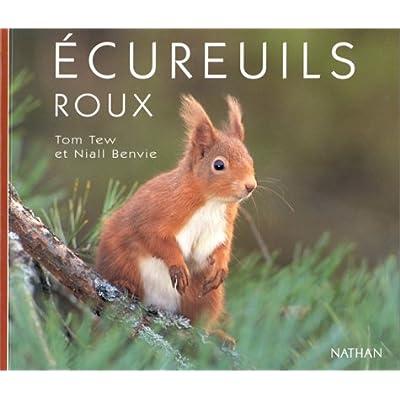 Ecureuils roux