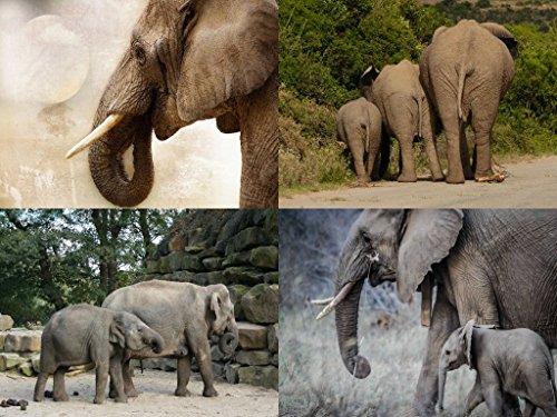 Lais Puzzle Elefante Collage 2000 Piezas