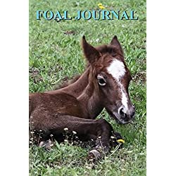 FOAL JOURNAL: Monitor the progress during your foals gestation period or first year of life. 52 weeks daily spaces and room for notes on the side.
