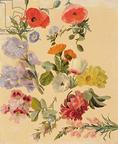 "Alu-Dibond-Bild 50 x 60 cm: ""Studies of Summer Flowers (oil on canvas)"", Bild auf Alu-Dibond"