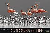 Colours of Life 2018: Großer Foto-Wandkalender mit farbigen schwarz weiß Bildern. Edler schwarzer Hintergrund und Foliendeckblatt. PhotoArt Panorama Querformat: 58x39 cm.