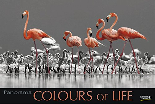 Colours of Life 2018: Großer Foto-Wandkalender mit farbigen schwarz weiß Bildern. Edler schwarzer Hintergrund und Foliendeckblatt. PhotoArt Panorama Querformat: 58x39 cm. (Schwarze Menschen Bilder)