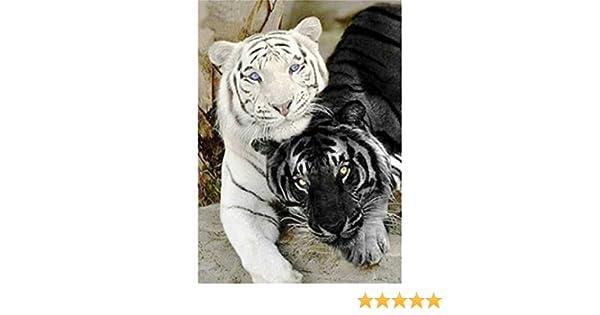 Broderie diamant Sunnay 5D bricolage plein diamant peinture point de croix diamant Salon Chambre D/écoration Autocollant mural Tigre noir et blanc 30x40cm