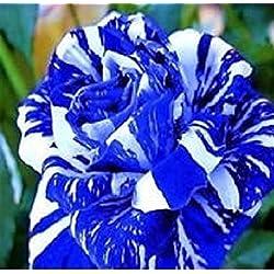 Blumensamen, Wildblumen, mehrfarbig, 100 Samen, rose-white+blue