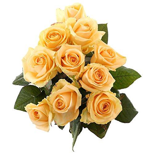 Choice of Green - 1 bouquet d?avalanche de pêche à la rose - 10 tiges - Hauteur ? 60 cm - Qualité