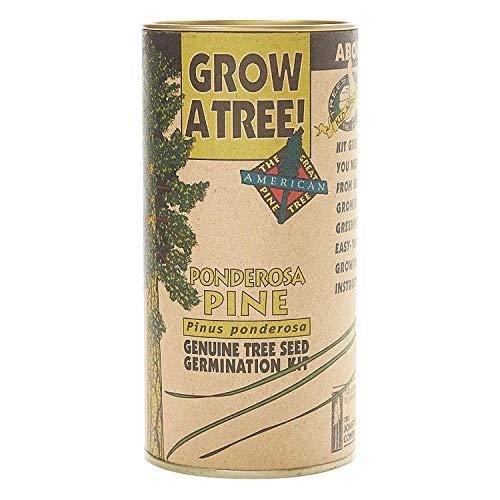 Keimfutter: Ponderosa Kiefer | Baum-Samen wachsen Kit | Die Jonsteen Unternehmen