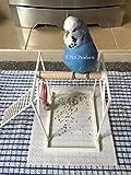 Il trespolo per Uccelli su Amazon. Trespolo da Terra/Pavimento, Perfetto per pappagallini, pappagalli, ECC. Parco Giochi per Uccelli. Cattura Gli Escrementi (incl. Attacco a Scala).