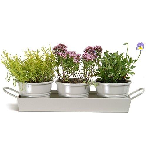 CKB Ltd® Set of 3 Pots on Tray Metal Vintage Windowsill Planter Kräutergarten Kit für Fensterbank Metall Vintage Pflanzgefäß für die Küche Wachsen Sie Ihre eigenen Kräuter zum Kochen Metal Tray
